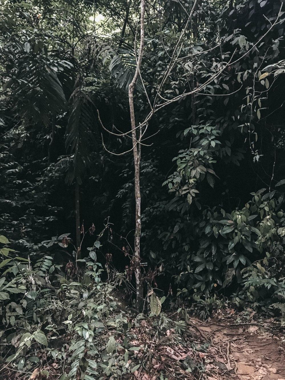 Bukit Lawang - 4